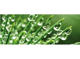 Biochemicals found in plants